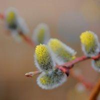 Весна :: Александр Коликов