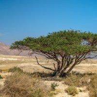 На побережье Мертвого моря (другой ракурс) :: Владимир Горубин