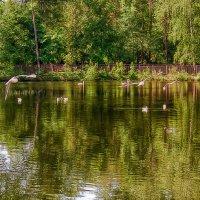 Городской парк :: Sergey Kuznetcov