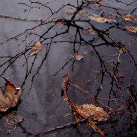 Осенний дощ :: Олександра Сидор