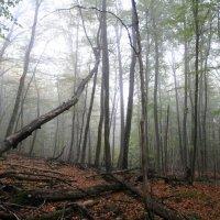 Буковый лес :: Владимир Клюев