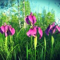 Цветы :: Катерина Шурыгина