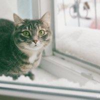 Прогулка домашней кошки :: Алена Каблукова