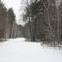 зима :: Дарья Полозюк