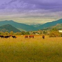 Абхазия... :: Владимир Хиль