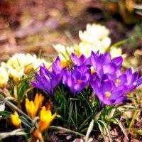 Цветы :: Евгений Смирнов