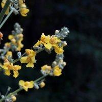 цветок :: Дарья Сашина