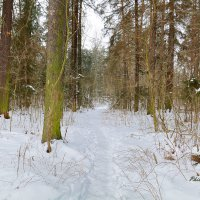 Зимняя тропинка :: Виктор Филиппов