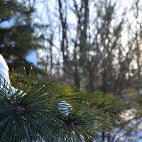 Зимовий ліс :: Вера Янкова