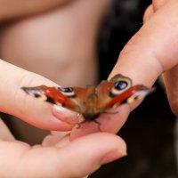 Бабочка :: Ирина Ворсина