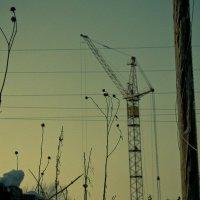 Растение, которое думало, что оно подъемный кран :: Сергей Игуменшев