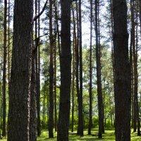 День в лесу :: Дмитрий Кошелев