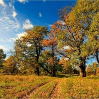 Дорога в дубовый лес :: Nikita Volkov