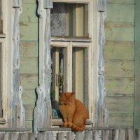 Зима в деревне :: Евгеша Живчик