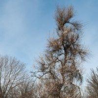 дерево-чертополох :: Roman Globa
