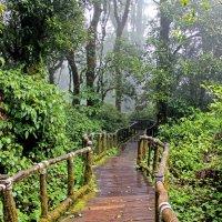 Таиланд. Спуск с вершины самой высокой в Таиланде горы Интанон, 2565м :: Владимир Шибинский