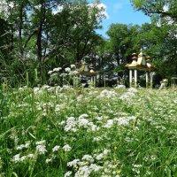 Лето в парке :: Наталия Короткова