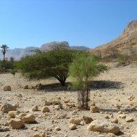 Эйн-Геди, Мертвое море. :: Герда