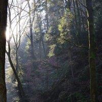 Утренний лес в дымке :: Sanari Denrei