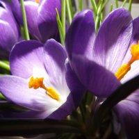Цветы :: Vika_B
