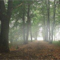 Туманное утро в городском парке :: Nikita Volkov