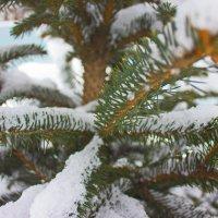 Колючая елка :: Bakhit Zhussupov