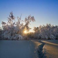 Первое солнце после зимней спячки :: Денис Антонов