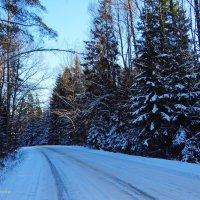 Зимняя дорога. :: Антонина Гугаева