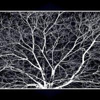 графическое дерево :: Shmual Hava Retro