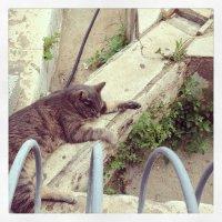 cat :: Роман Сидоровъ