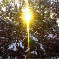 Восходящее солнышко :: Lera Karimova