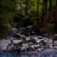 Река в лесу :: Мария Бродская (Гурьянова)