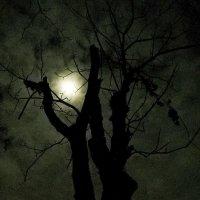 Двое под луной :: Александр Бурилов
