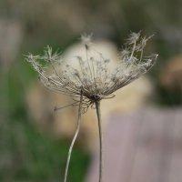 Wild Flower:) :: Ира Дунайцева