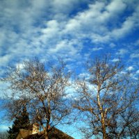Январское небо :: Татьяна Пальчикова