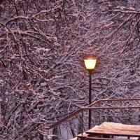 вечер фонарь :: Svetlana Serova