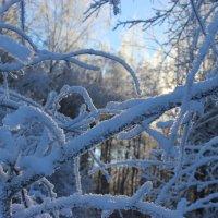 Затерянная в снежных дебрях :: Mariya laimite