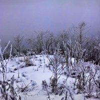 Холм в тумане... :: Дарья Казбанова