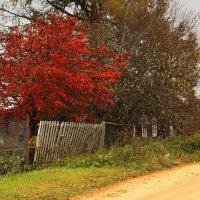 Осень в деревне. :: Наталья Цветкова