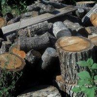 Когда – то, эти вот дрова, Собой являли дерева.  Всё изменилось с временами. И стали дерева дровами. :: Ольга Кривых