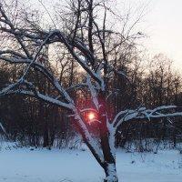 закат :: Ася Лебедева