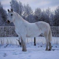 Моя любимая модель. :: Любовь Анищенко