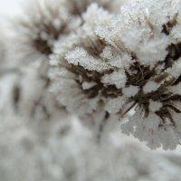 Мороз :: Сергей Иванов