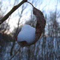 Зимний листок :: Толя Толубеев