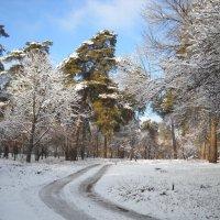 Зима пришла... :: Svetlana Kravchenko