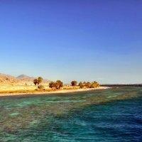 Берег Красного моря :: Dr Solar
