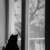 кот скучает :: Анастасия Гаврилюк