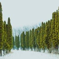 В ботаническом саду :: Ivan teamen