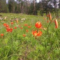 Цветы :: Антонида Михайлова