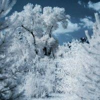Зима  или  Лето )) :: Anton Fedoseev